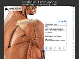 Pictures Of Anatomy Of The Human Body Pocket Anatomy On The App Store