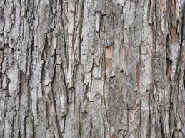 tree wood texture 2 free stock photos in jpg format for free