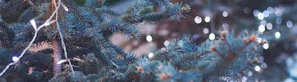 where to buy real trees with these 3 tips walddie