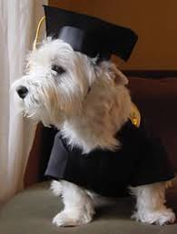 dog graduation cap and gown graduation cap and gown