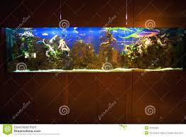 Home Aquarium Large Home Aquarium Stock Photo Image Of Hobby Fishes 20436368