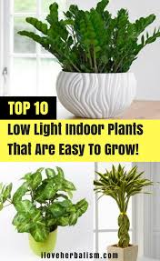 top 10 low light indoor plants that are easy to grow i love