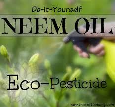 Natural Pesticides For Vegetable Gardens by Diy Neem Oil Eco Pesticide Garden Spray The Soft Landing