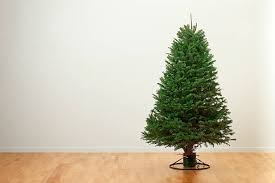 douglas fir christmas tree douglas fir christmas tree pictures images and stock photos istock