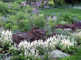 native new england plants how to plant a garden in new england the garden inspirations