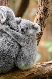 free images tree animal cute wildlife zoo fur small