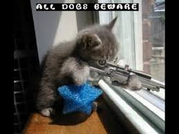 Funny Cat And Dog Memes - cute cats dogs always make you laugh 56 funny cat dog youtube