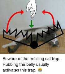 Cat Trap Meme - beware of the enticing cat trap rubbing the belly usually