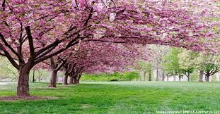 landscaping companies ornamental trees for your lawn