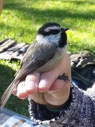 articles u2013 prairie birder