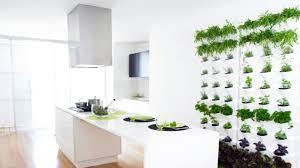 plante de cuisine cuisine le plan de travail joue avec les objets déco