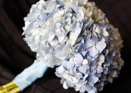 Hydrangea Wedding Wedding Bouquets Dream Bouquet