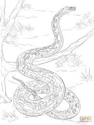 boa constrictor coloring page free printable snake coloring pages