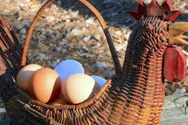 How To Keep Backyard Chickens by How To Keep Chickens From Eating Eggs Hgtv