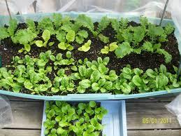 square foot gardening cheryl u0027s garden goodies