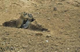 Arizona wild animals images Desert wildlife jpg