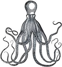 25 unique octopus images ideas on images of octopus