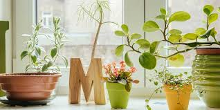 how to revive a nearly dead houseplant good housekeeping