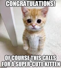 Cute Kitten Memes - congratulations of course this calls for a super cute kitten meme
