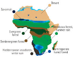 south america map rainforest the tropical forest