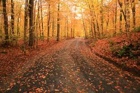 places fall foliage nyc u2013 440 car service