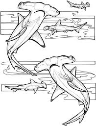 hammerhead sharks coloring free printable coloring pages