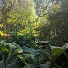 Ucla Botanical Garden 5 L A Gardens You Need To Find Now Discover Los Angeles