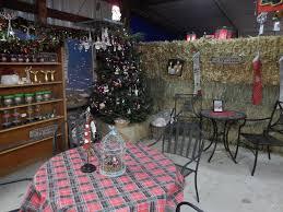 christmas trees clayton valley pumpkin farm u0026 christmas trees