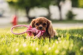 how to keep dogs happy while you u0027re not home popsugar pets
