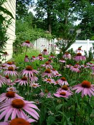 how to start a butterfly garden north american butterfly association