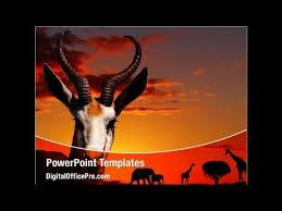 african animals powerpoint template backgrounds digitalofficepro