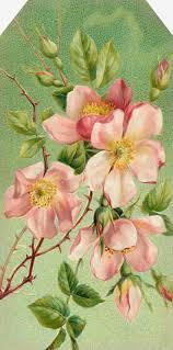 524 best graphics lilac u0026 lavender blog images on pinterest
