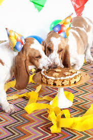 peanut butter turkey bacon cake recipe for dogs fresh american