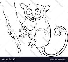 tarsier animal cartoon coloring book royalty free vector