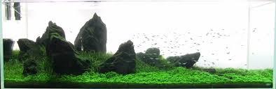 Aquascape Tank Shrimp Tank Guide Shrimp Setup And Care Aquariuminfo Org