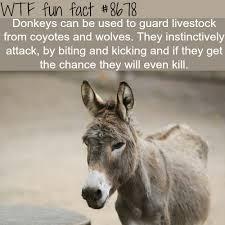 Meme Generator Koala - donkeys as guard animals wtf fun facts facts trivia pinterest