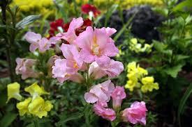 flowers canada fergus a flowers in garden ontario photos canada n12831