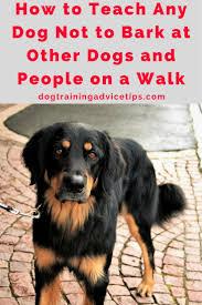 how to train dog to stop barking best 25 dog training ideas on pinterest dog training tips