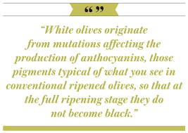 the white olives of malta aramcoworld