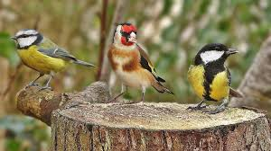 bird sounds spectacular morning birdsong youtube