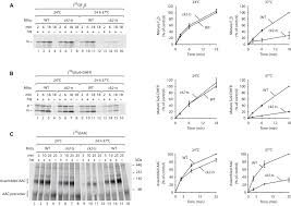 regulation of mitochondrial protein import by cytosolic kinases cell