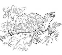 realistic giant land turtle difficult coloring pages for grown ups