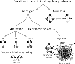 structure evolution and dynamics of transcriptional regulatory
