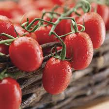 cupid hybrid tomato seeds from park seed