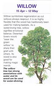 sacred celtic trees willow willows are beautiful supple and bend