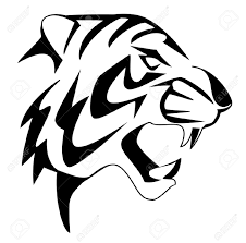 white tiger clipart easy pencil and in color white tiger clipart