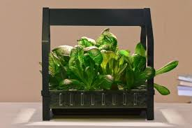 ikea wants to put a hydroponic garden in every home kitchen eater