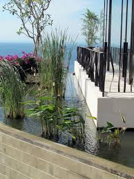 Massachusetts Vegetaion images Different made wijaya sassoon house bali aesthetic water jpg