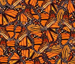 monarch butterfly fabric jenfur spoonflower