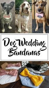 classic dog ring holder images Dog wedding bandana perfect wedding bandanas and dog jpg
